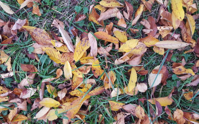 L'autunno, dicono, è la stagione dei magri!