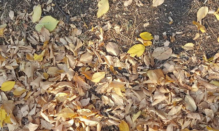 Cadono le foglie, cadono i capelli